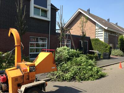 BoomServiceRutten Bomen snoeien kappen vellen en advies boom 49