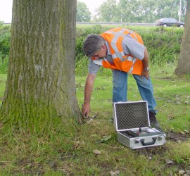 BoomServiceRutten boom technisch onderzoek boom veiligheid controle vta