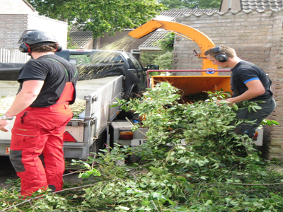 BoomServiceRutten Bomen snoeien kappen vellen en advies boom 48
