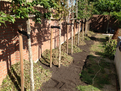 BoomServiceRutten Bomen snoeien kappen vellen en advies boom 46