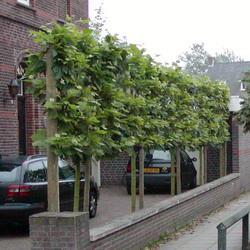 BoomServiceRutten Bomen snoeien kappen vellen en advies boom