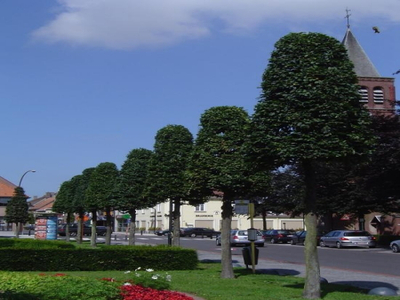 BoomServiceRutten Bomen snoeien kappen vellen en advies boom 40